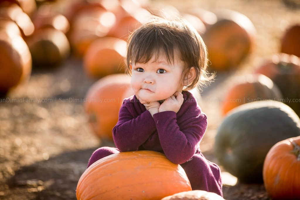 Cal Poly Pomona Pumpkin Patch