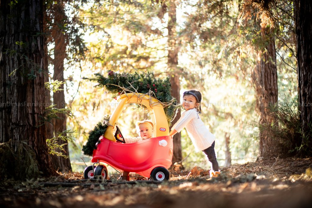 California Botanic Garden Christmas Photo